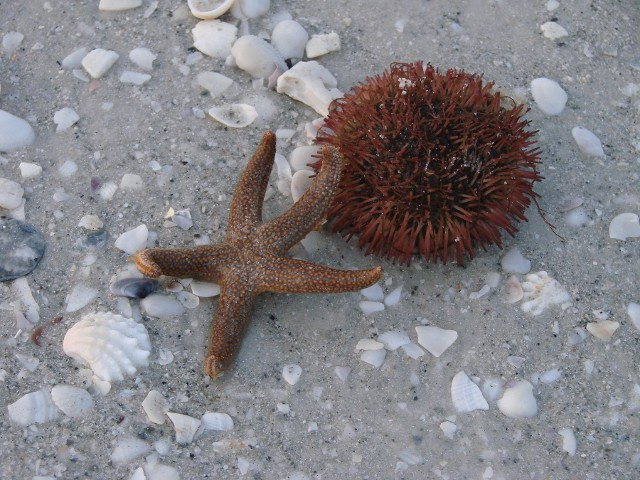 Starfish and Sea Urchin